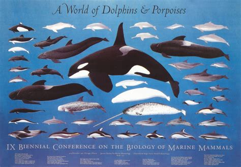 9th Conference - A World of Dolphins and Porpoises