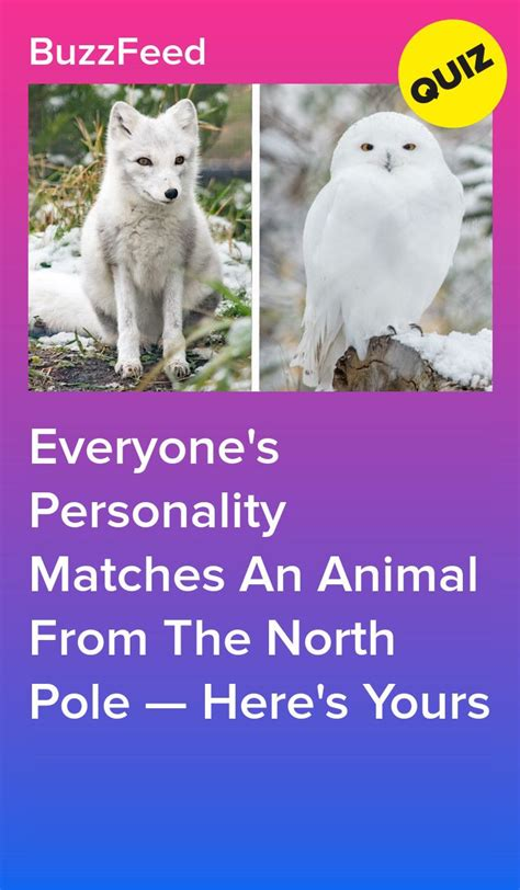 Everyone's Personality Matches An Animal From The North