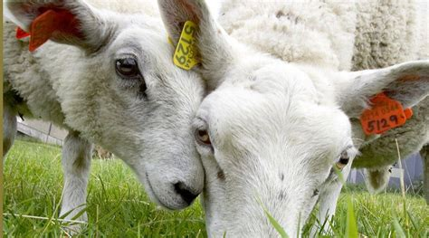 Master of Science in Animal Breeding and Genetics | Norges
