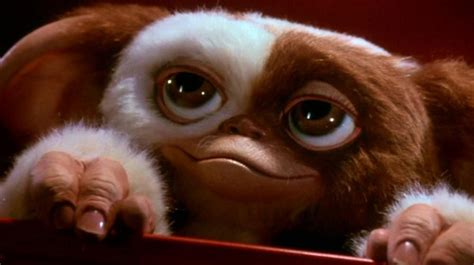 Should Gizmo Die in Gremlins 3? - THE HORROR ENTERTAINMENT