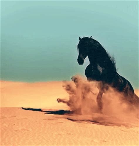 Great Horse Gifs - Best Animations