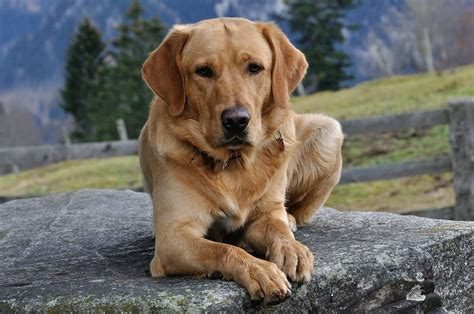 Home Remedies for Arthritis in Dogs - Effective Natural